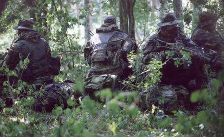 Наблюдение в лесу